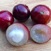 Jaboticaba has some tasty cousins