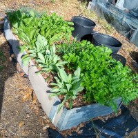 Small-scale, intensive home vegetable production