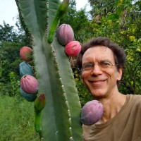 Experimenting with kadushi, Cereus repandus, as a fruit crop